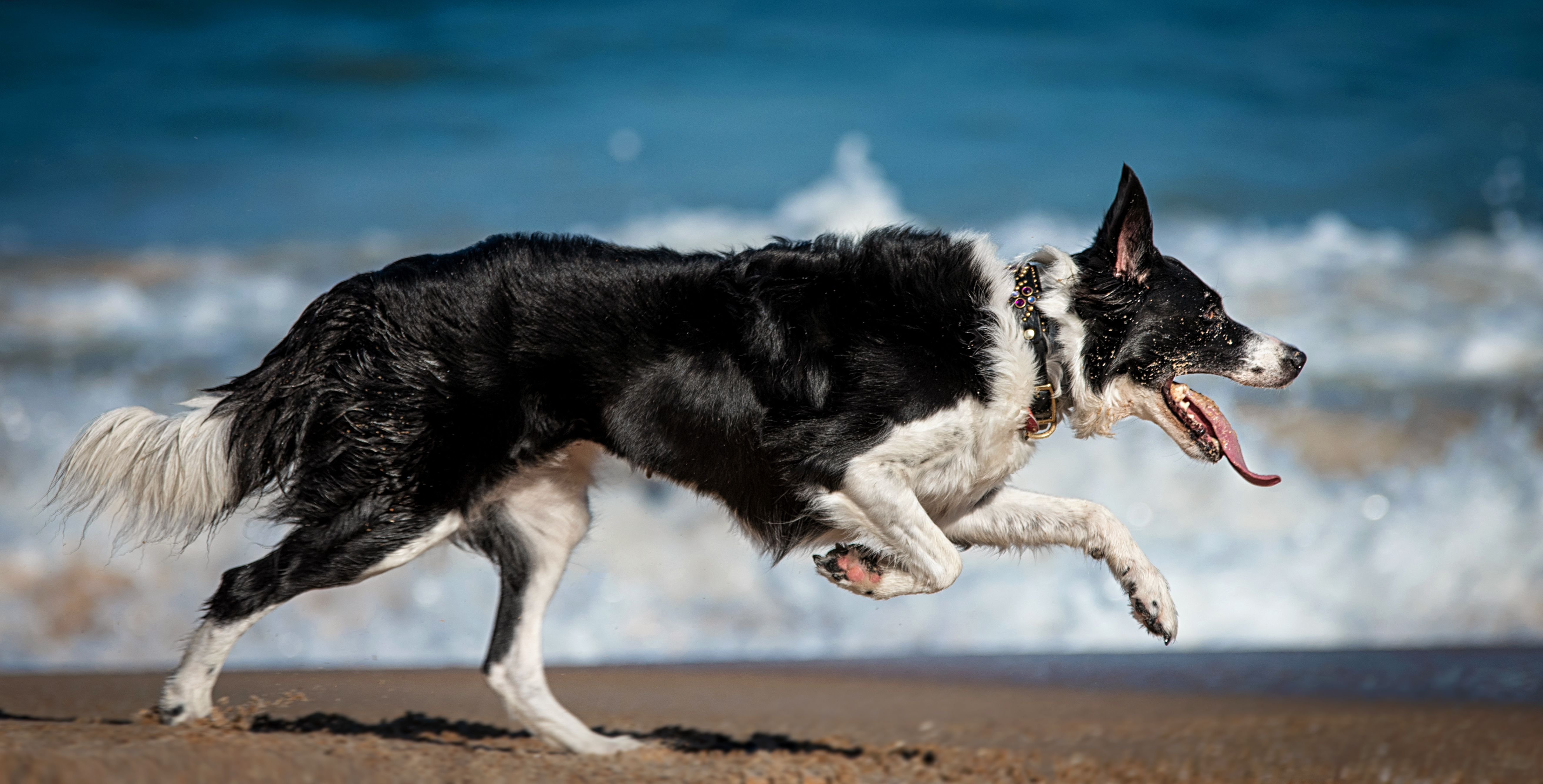 Best Dog Breeds for Runners