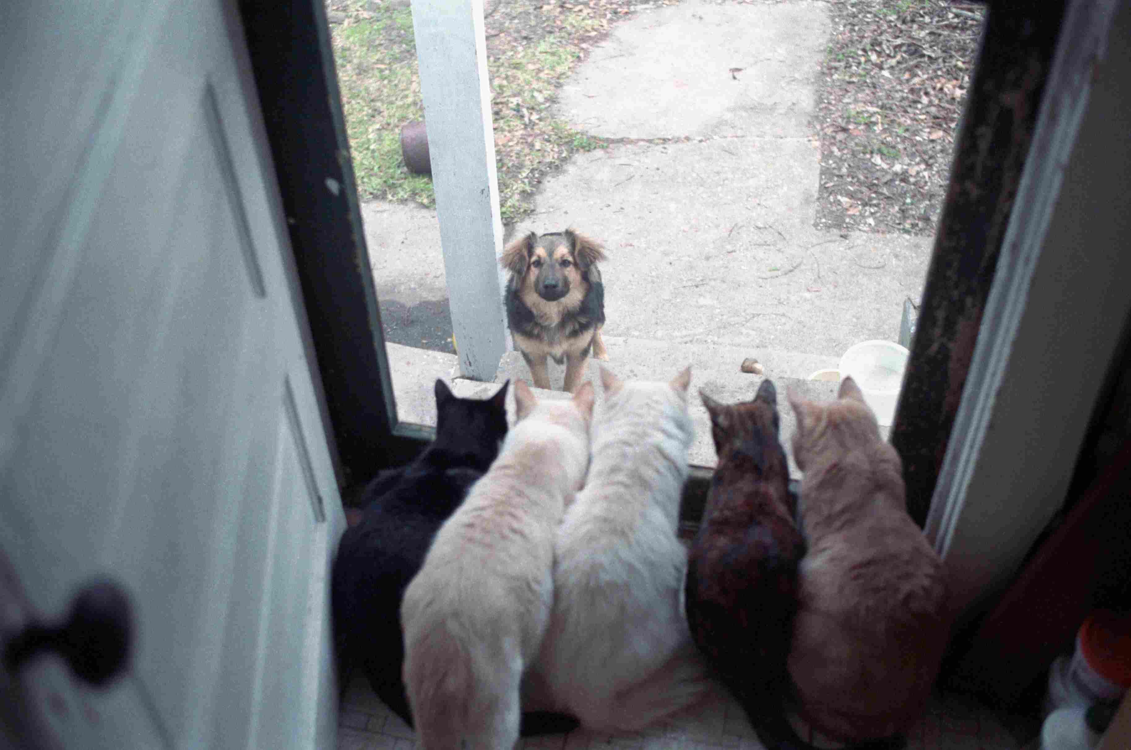 Perro mirando por la ventana forrada de gato