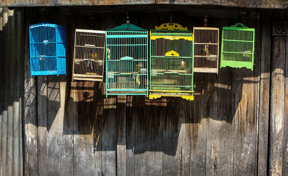 Pájaros en jaula contra la pared de madera para la venta en el mercado