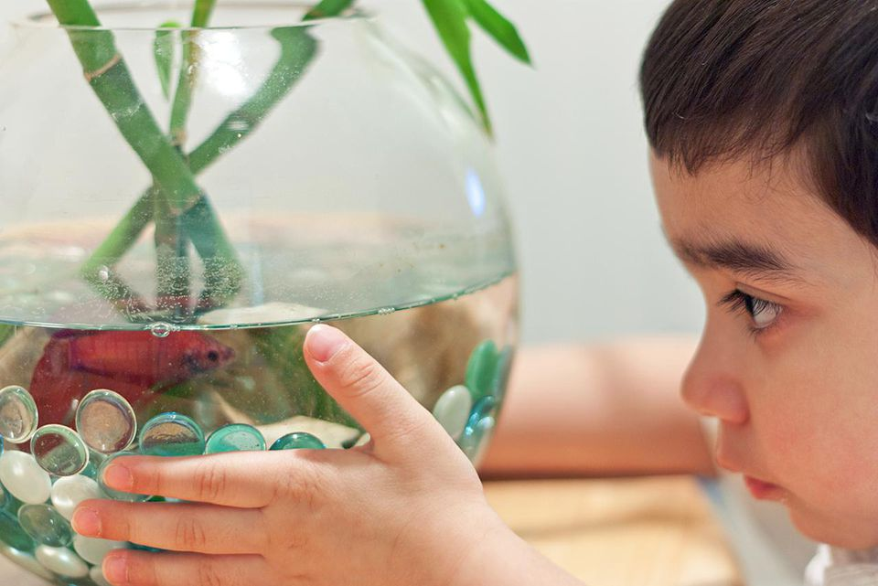 How To Properly Disinfect Toys : How to clean a small fish bowl properly