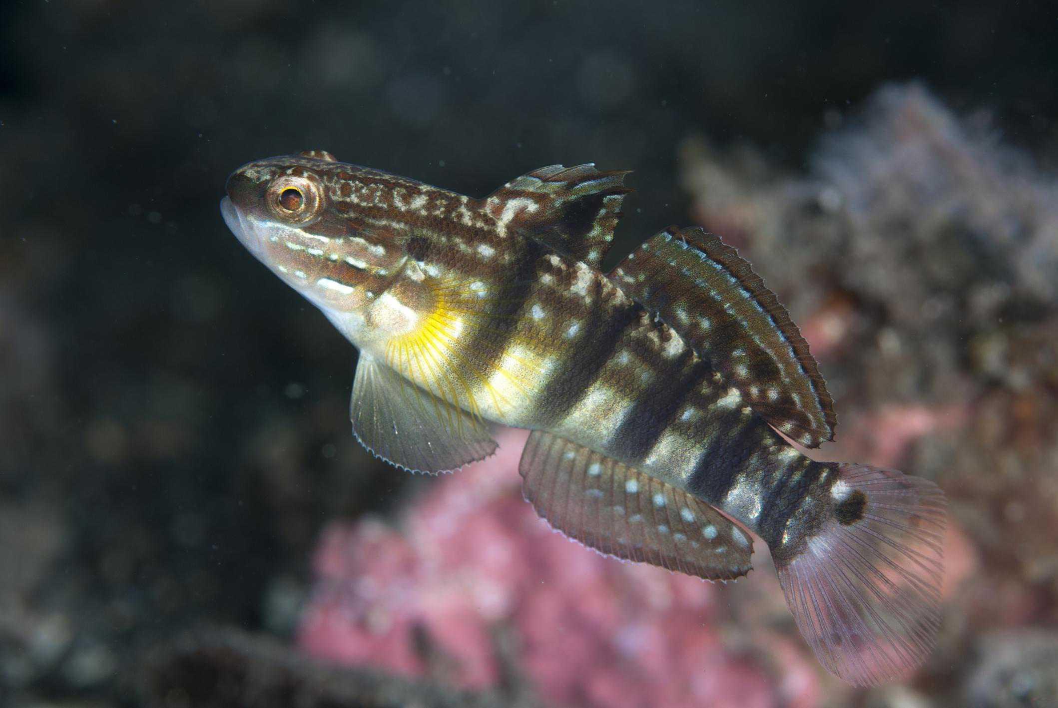Underwater dive site, Sulawesi, Indonesia