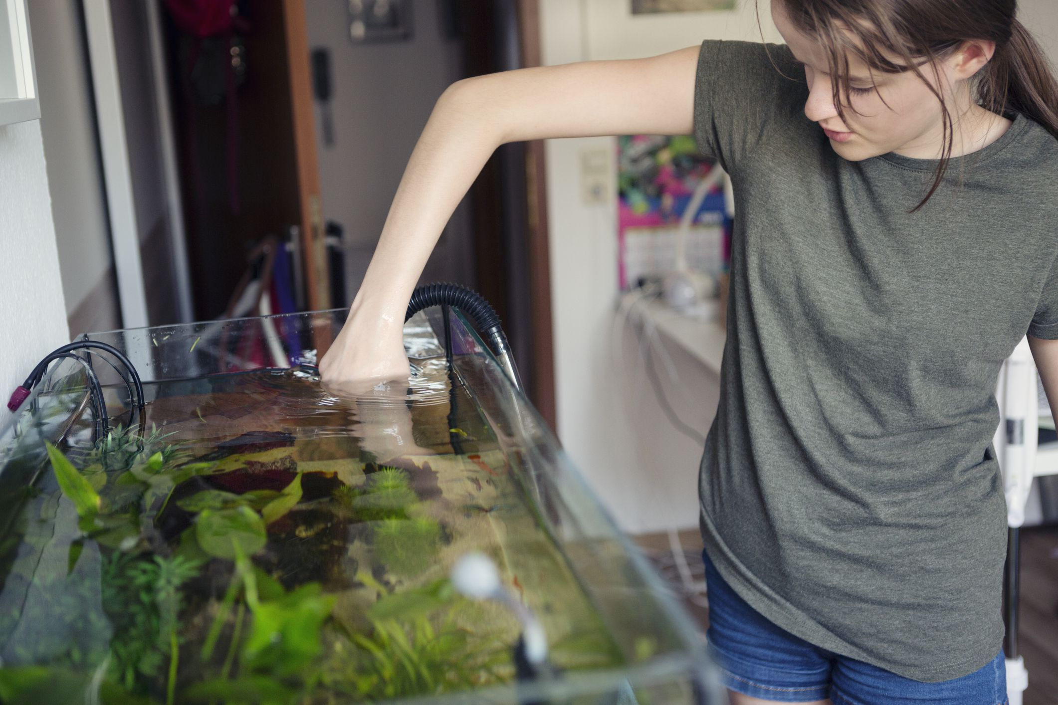 Monitors For Your Aquarium