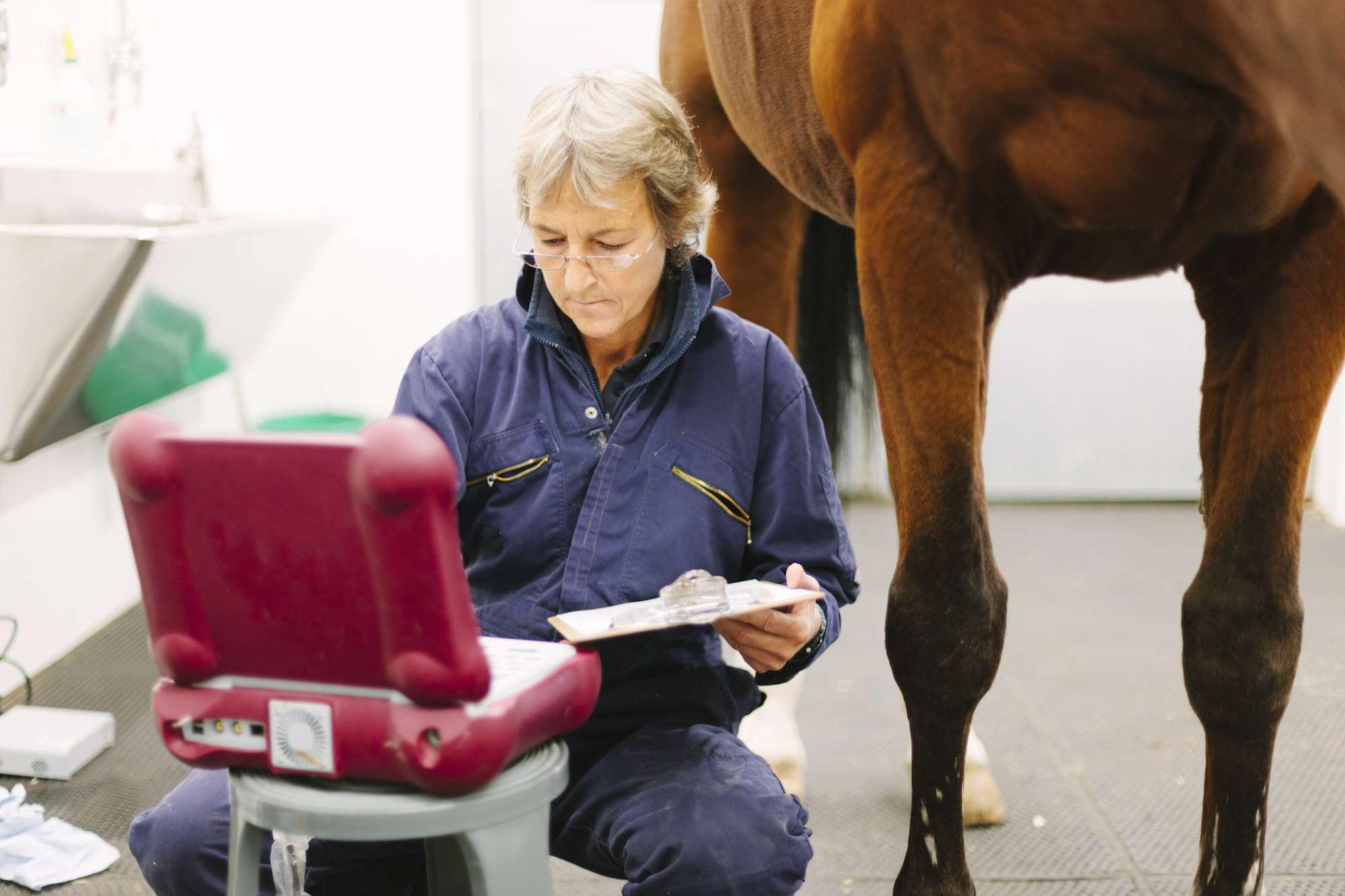 Un cirujano veterinario se prepara para realizar un examen ultrasónico del fetlock de un caballo.  Hospital Veterinario Coombefield, Granja Summerleaze, Axminster, Devon.