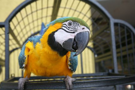 Why Is Your Pet Bird Screaming?