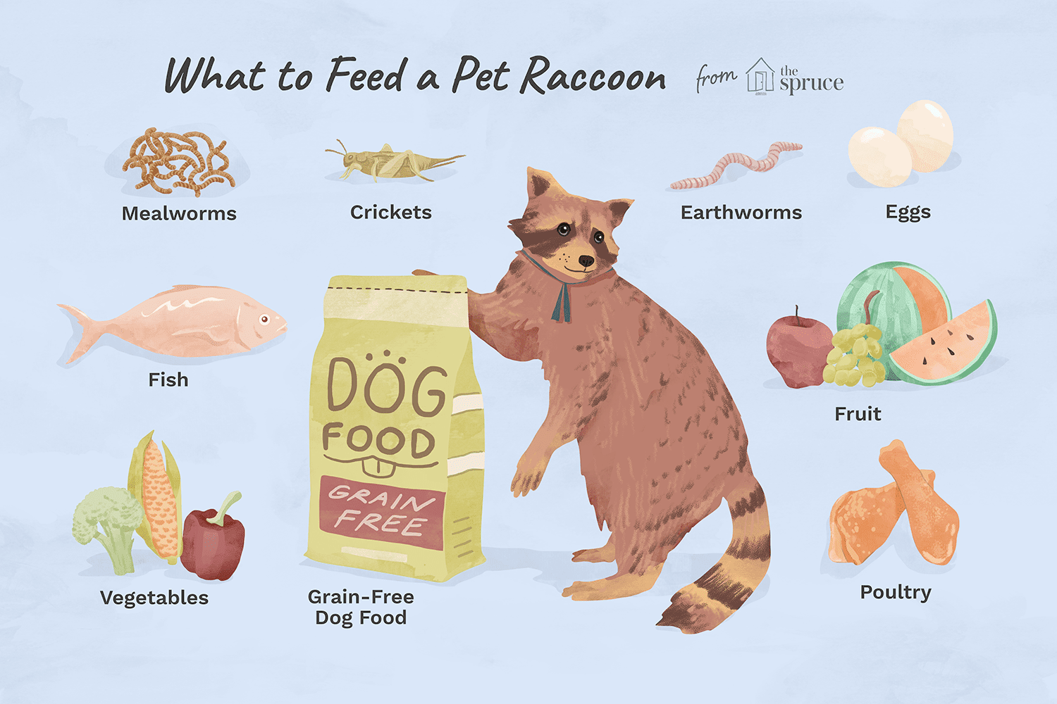 The Best Diet for a Pet Raccoon