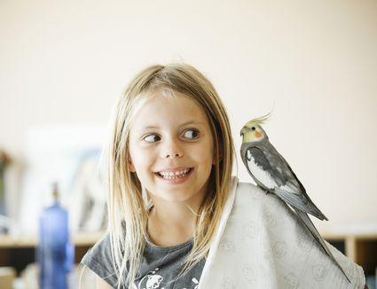 cockatiel on a girl's shoulder