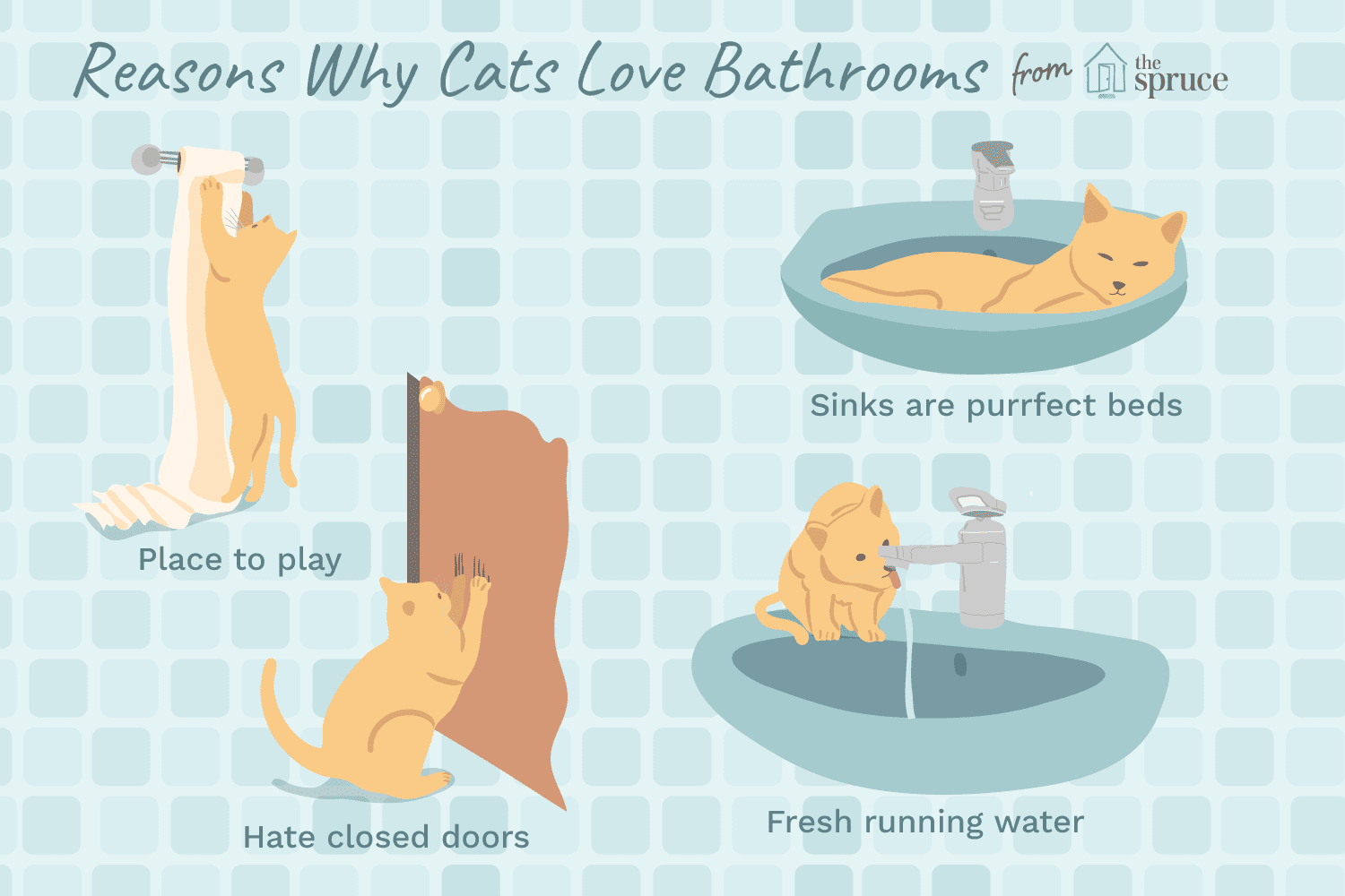 7 Reasons Why Cats Love Bathrooms
