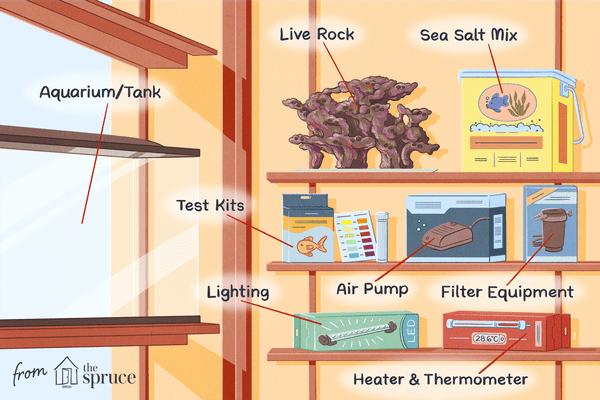 checklist for saltwater aquarium at home illustration
