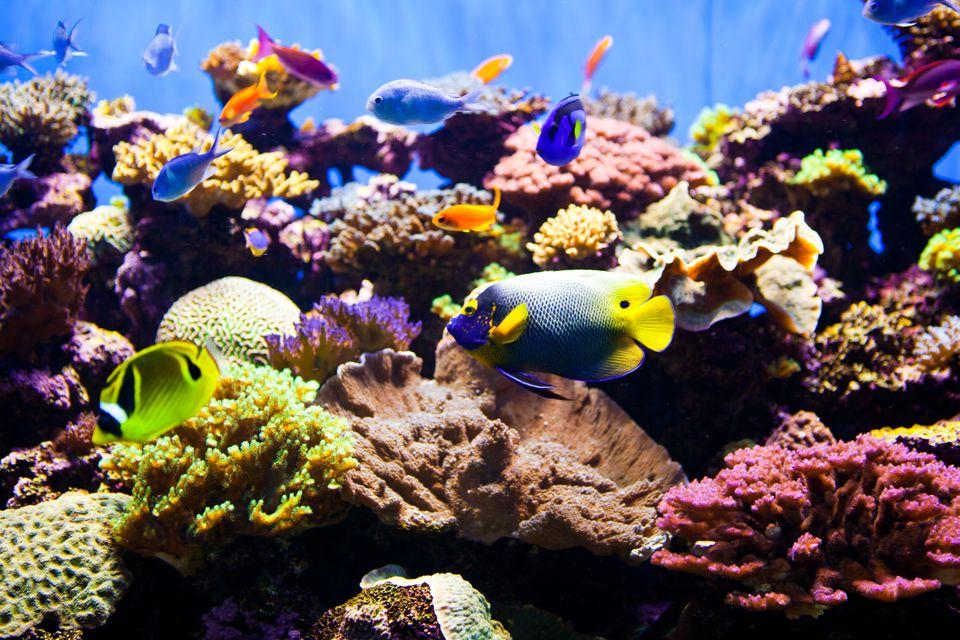 Tanque de arrecife de acuario