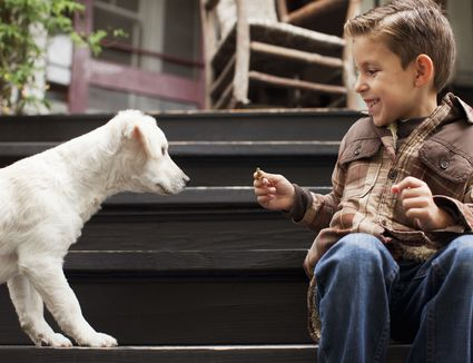 Boy playing with puppy on steps outdoors
