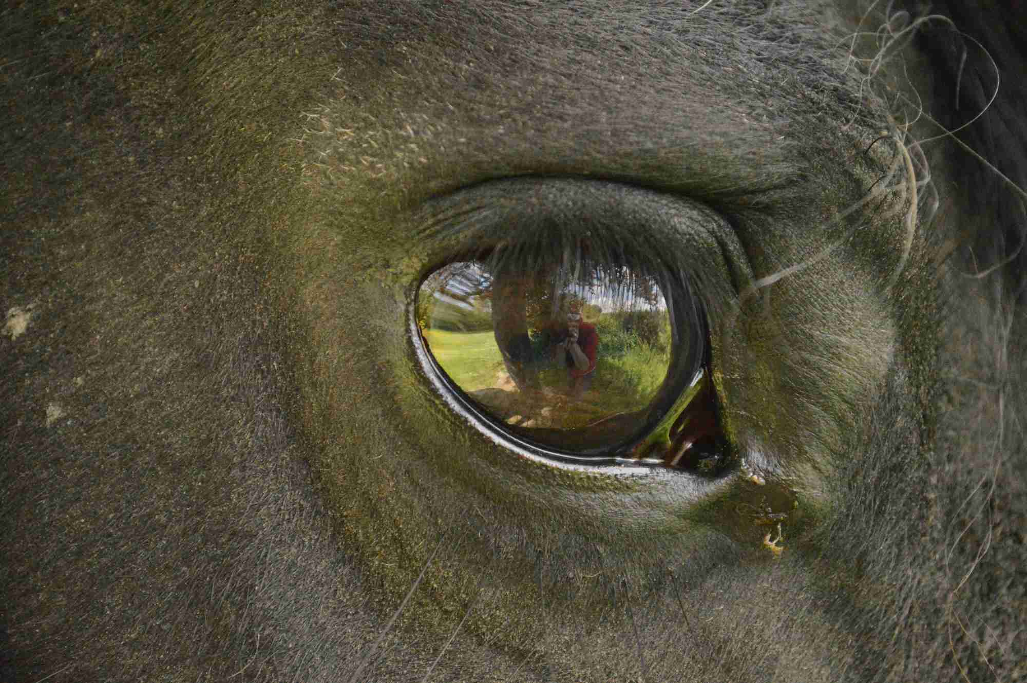 How to Treat Eye Infections and Injuries in Horses