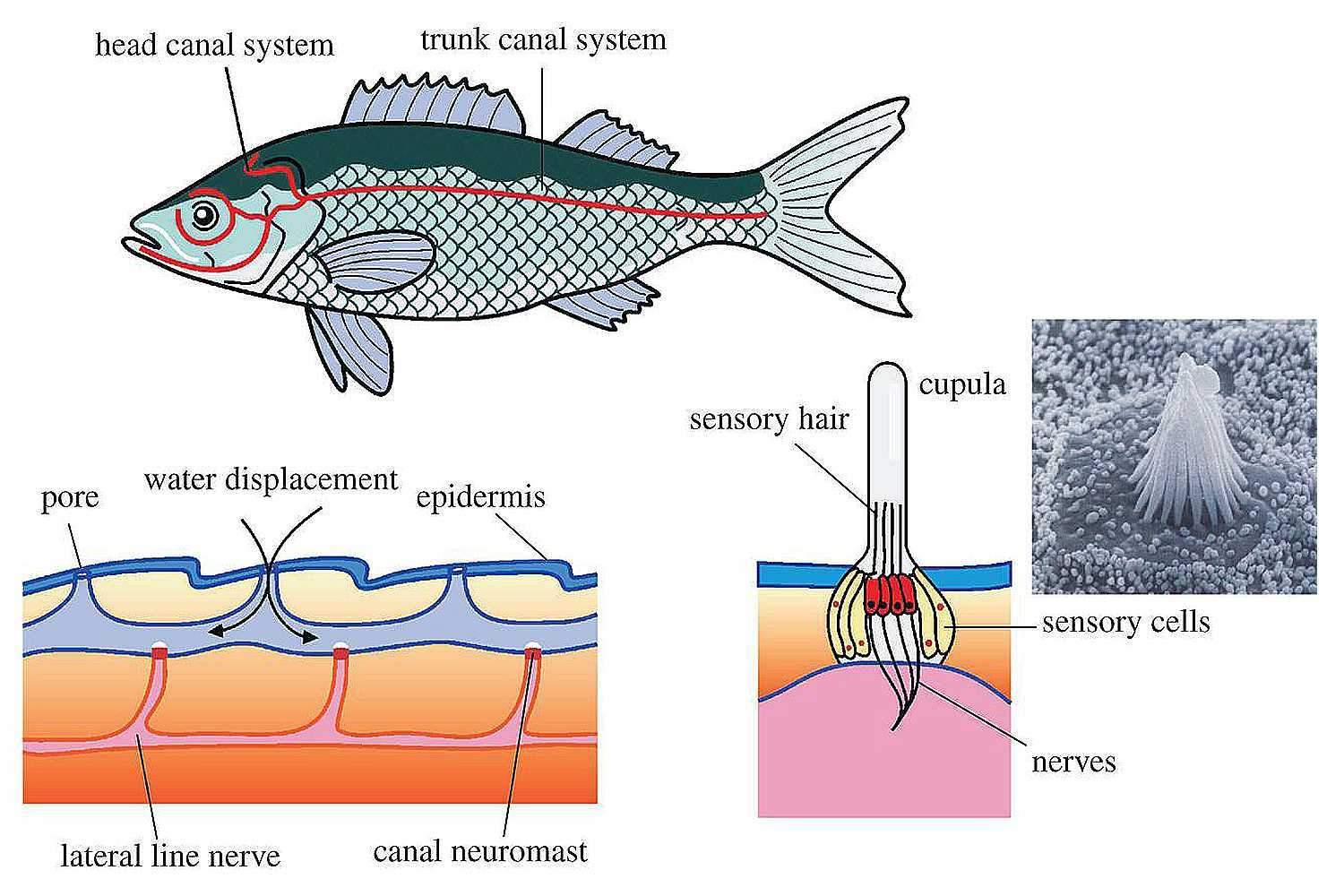 The Anatomy of Fish, How are all Fish the Same?