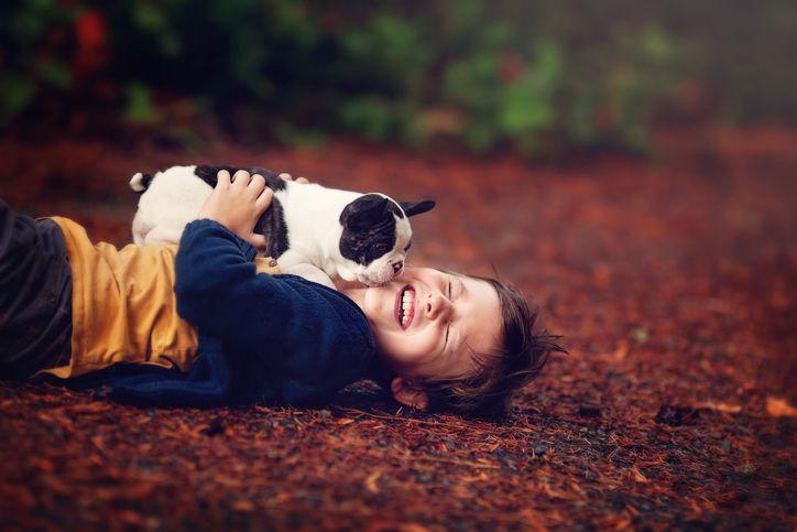 Boy with French Bulldog puppy