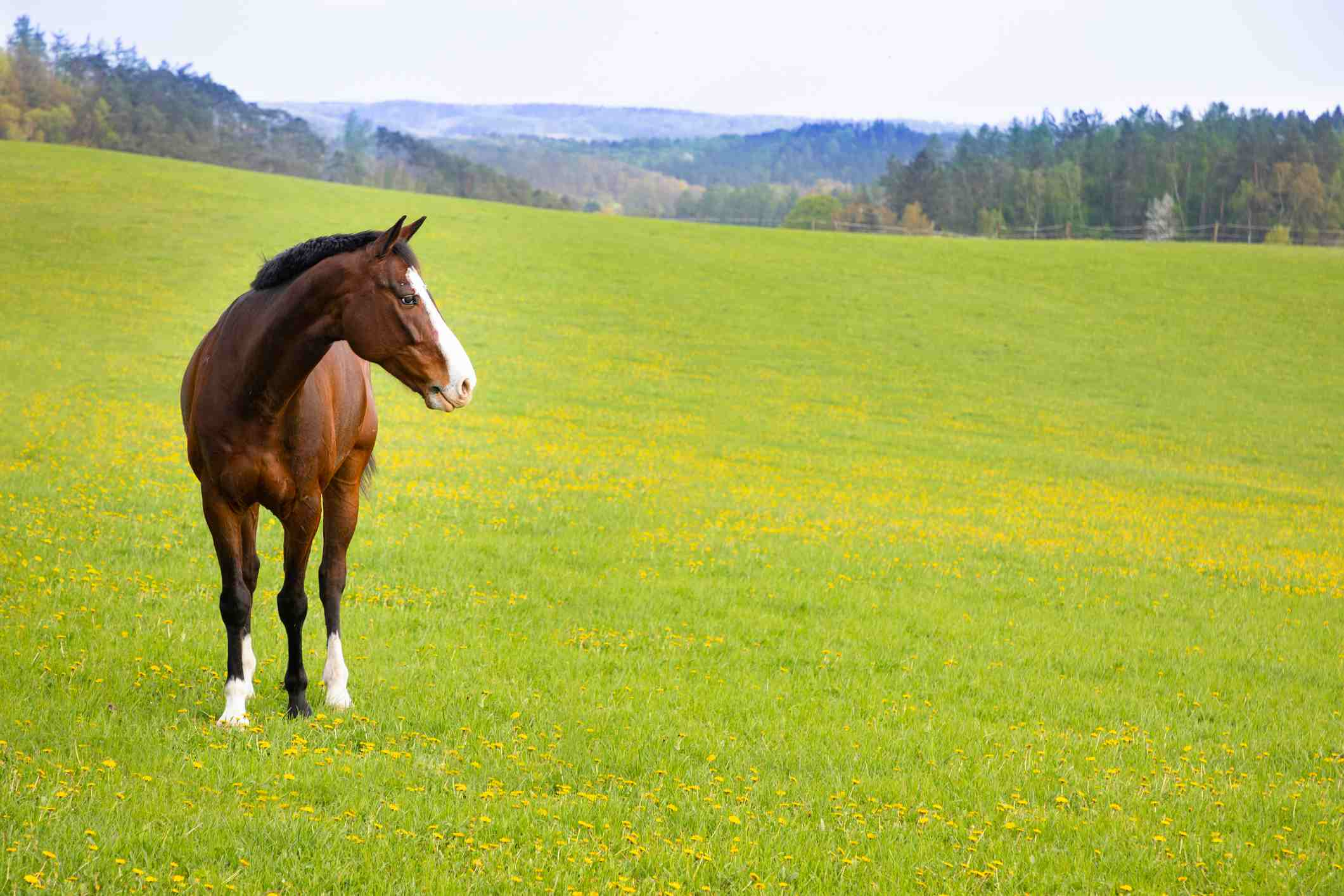Horse looking lost on a field