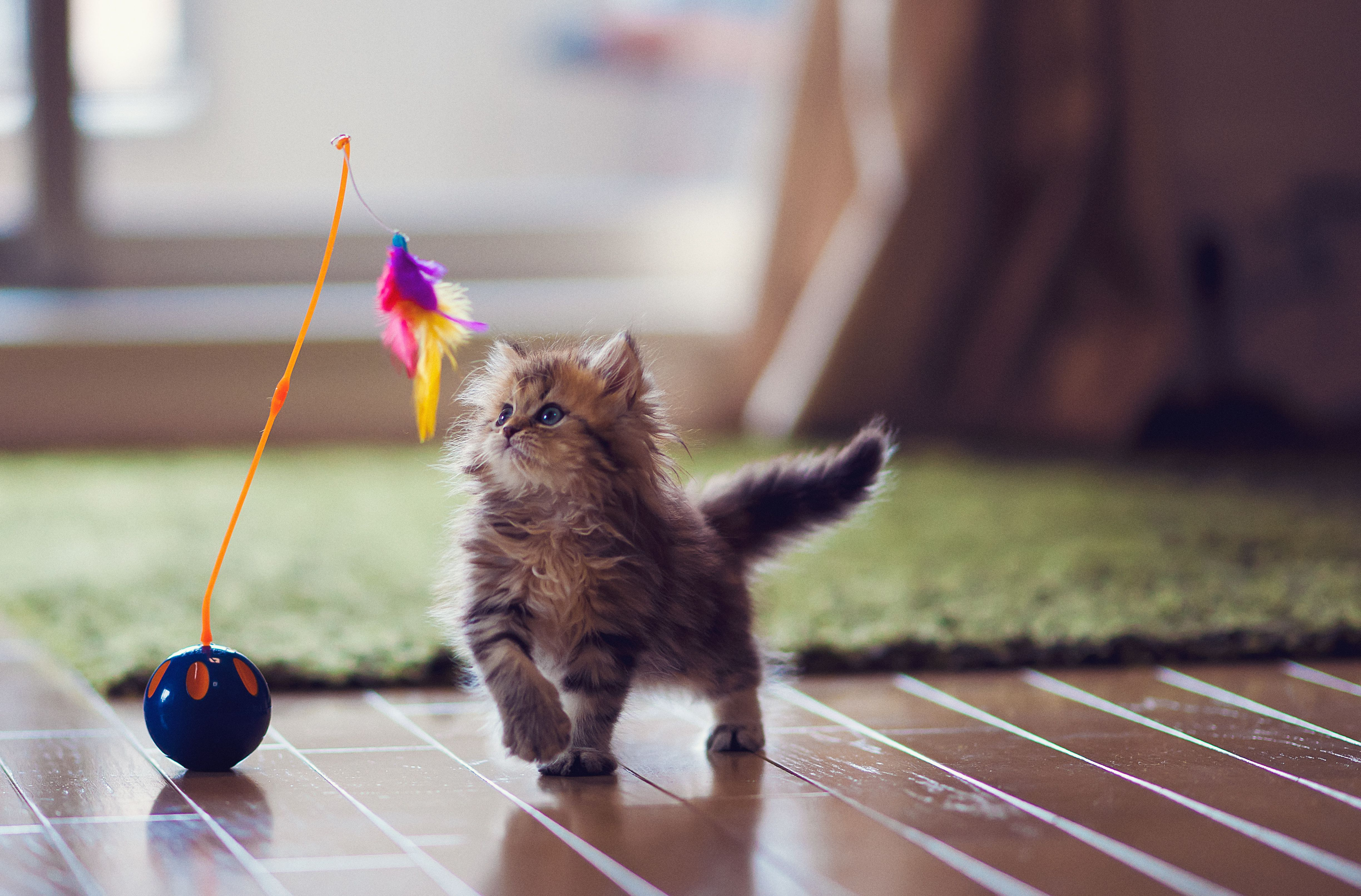 The 8 Best <b>Cat Toys</b> of 2019