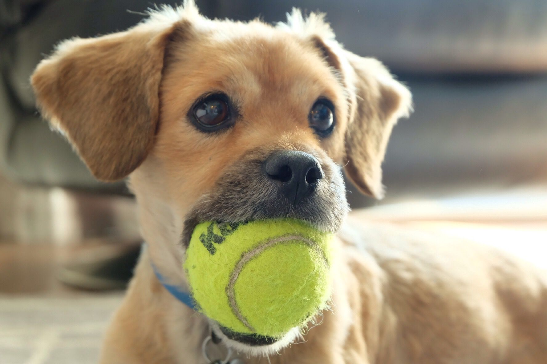 The science behind how dogs play | MNN - Mother Nature Network  |Dog Play