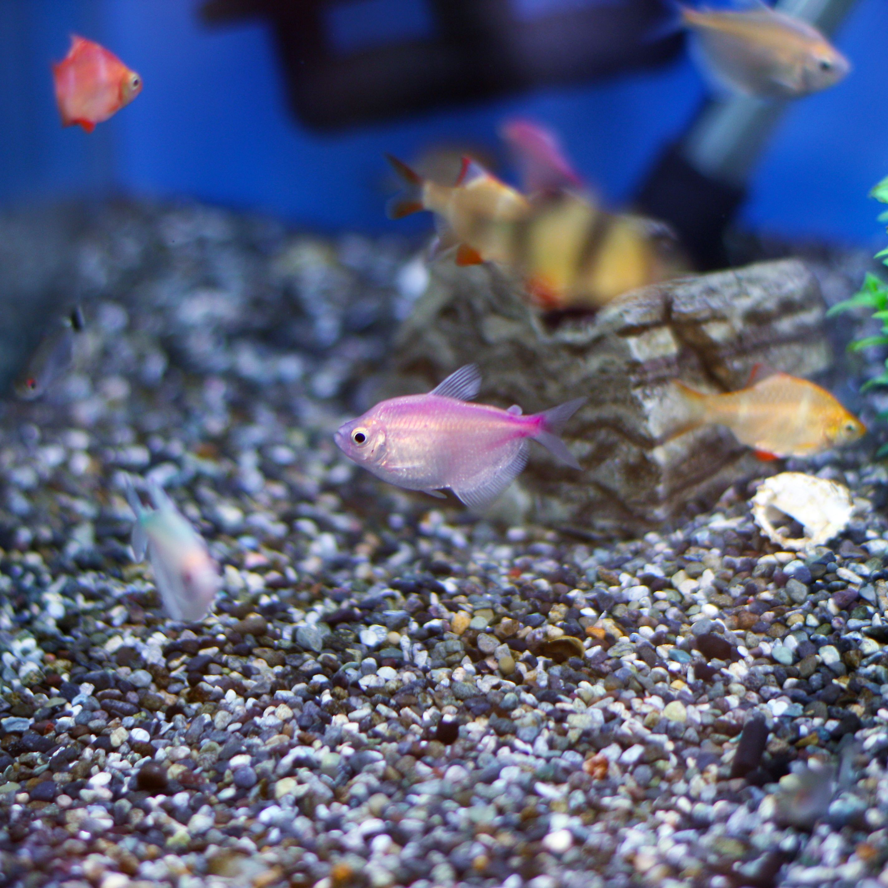 The Importance of Using Malachite Green in Aquariums
