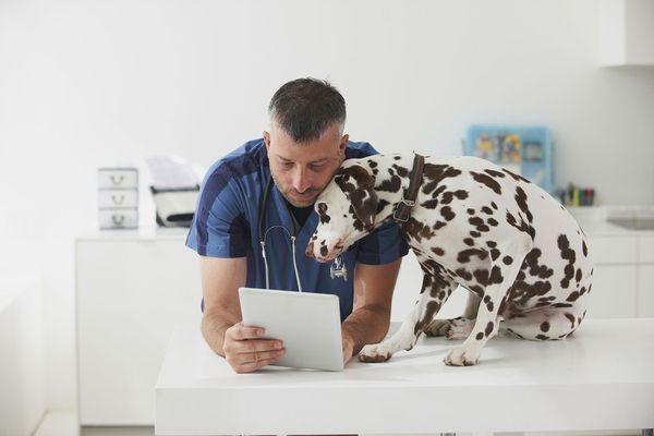 Veterinarian cuddling dog and using digital tablet