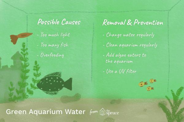 green aquarium water illustration