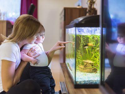 using activated carbon in aquarium filters
