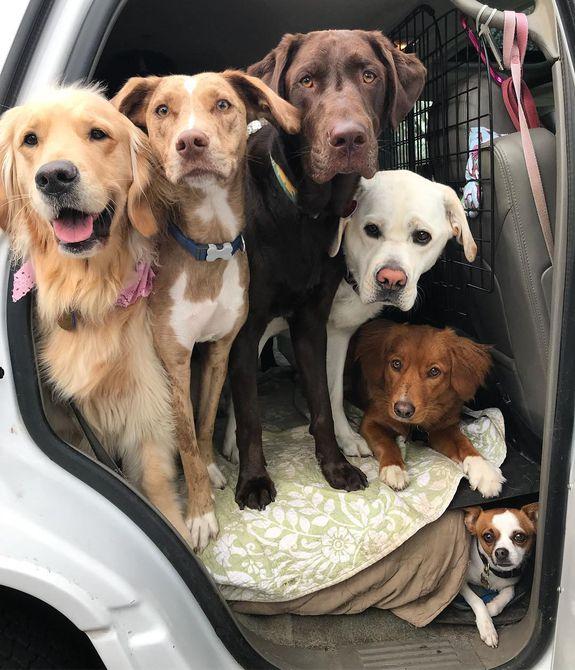 Grupo de perros en la parte posterior asiento de un automóvil , Tramezzini, sándwiches italianos , Dos perros disfrazados para un fotomatón , Perro trayendo un palo del otro lado del patio , Regalos para la fiesta del cachorro