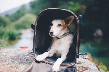 The 7 Best Dog Carriers Of 2019