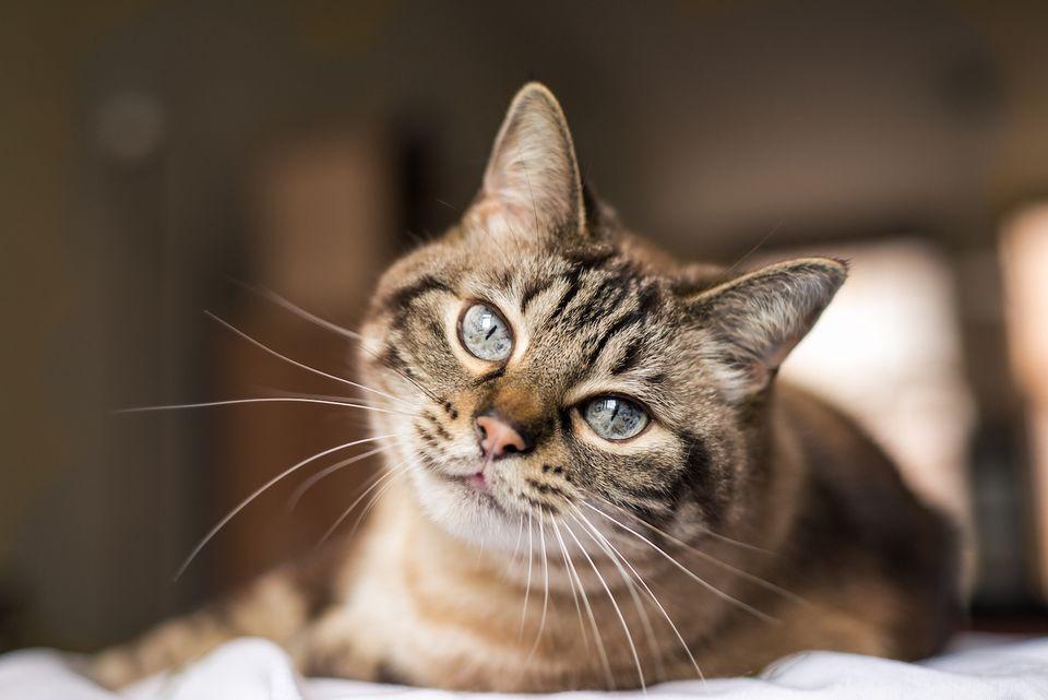 gato mayor mirando a cámara