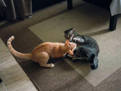 Reasons Why Pet Cats Are Aggressive and How to Stop It