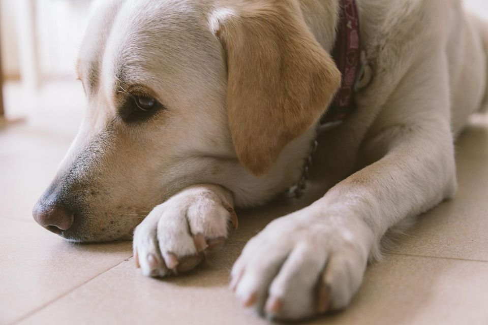 Can Pet Food Cause Seizures In Dogs
