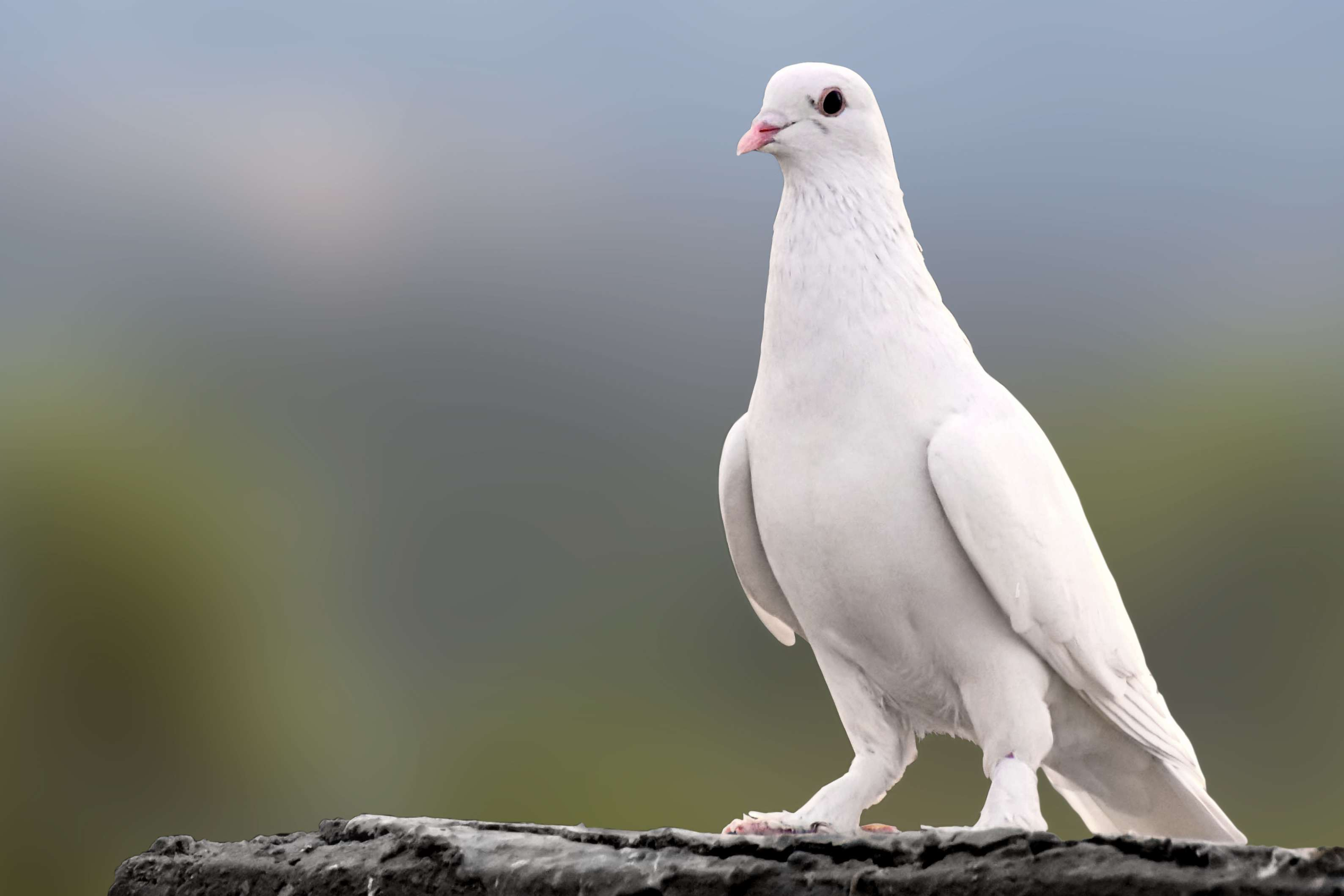 Close-Up Of Dove On Wall