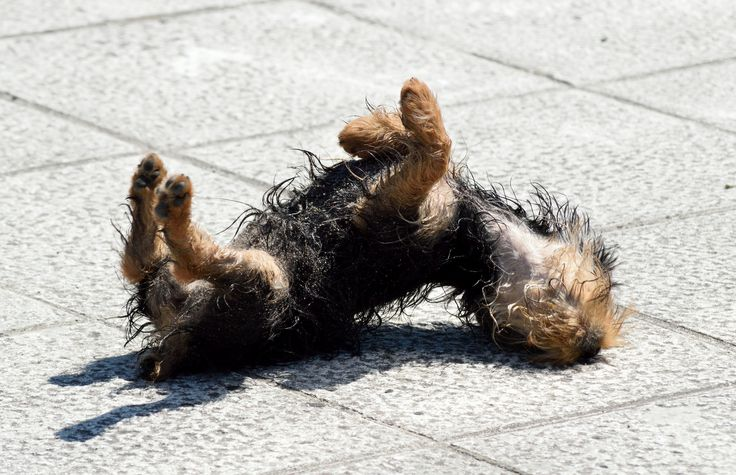 dog rolling around in the sun