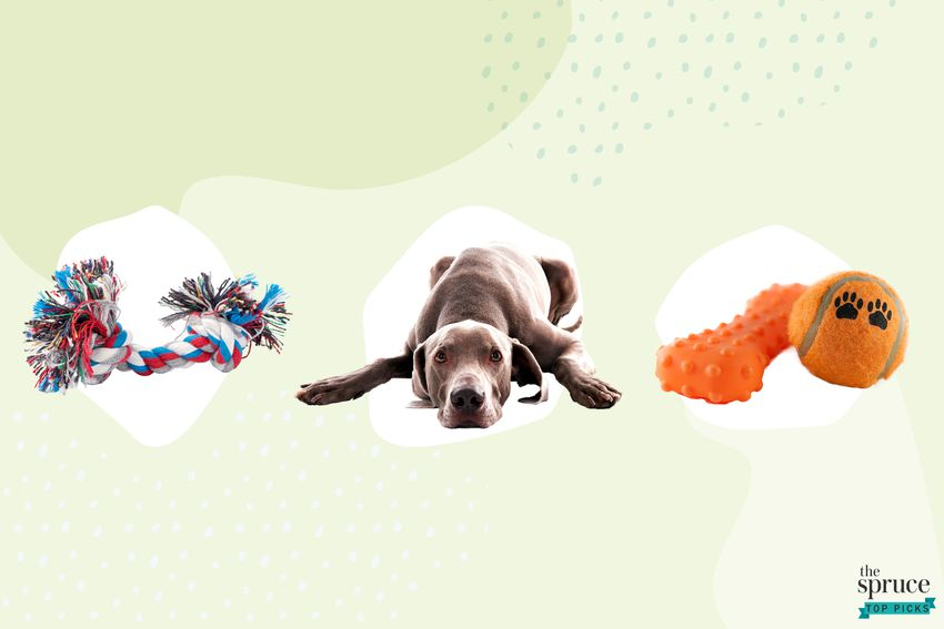 Photo composite of a tug toy, a dog laying down, a bone and a ball over a green background.