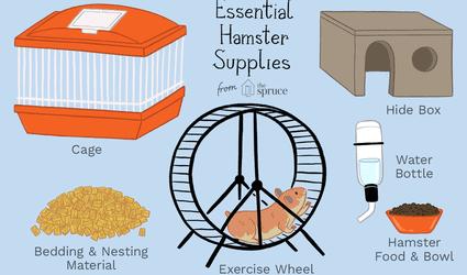 Essential hamster supplies