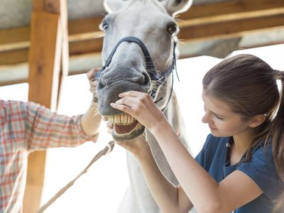 9 Fascinating Facts About Horse Manure