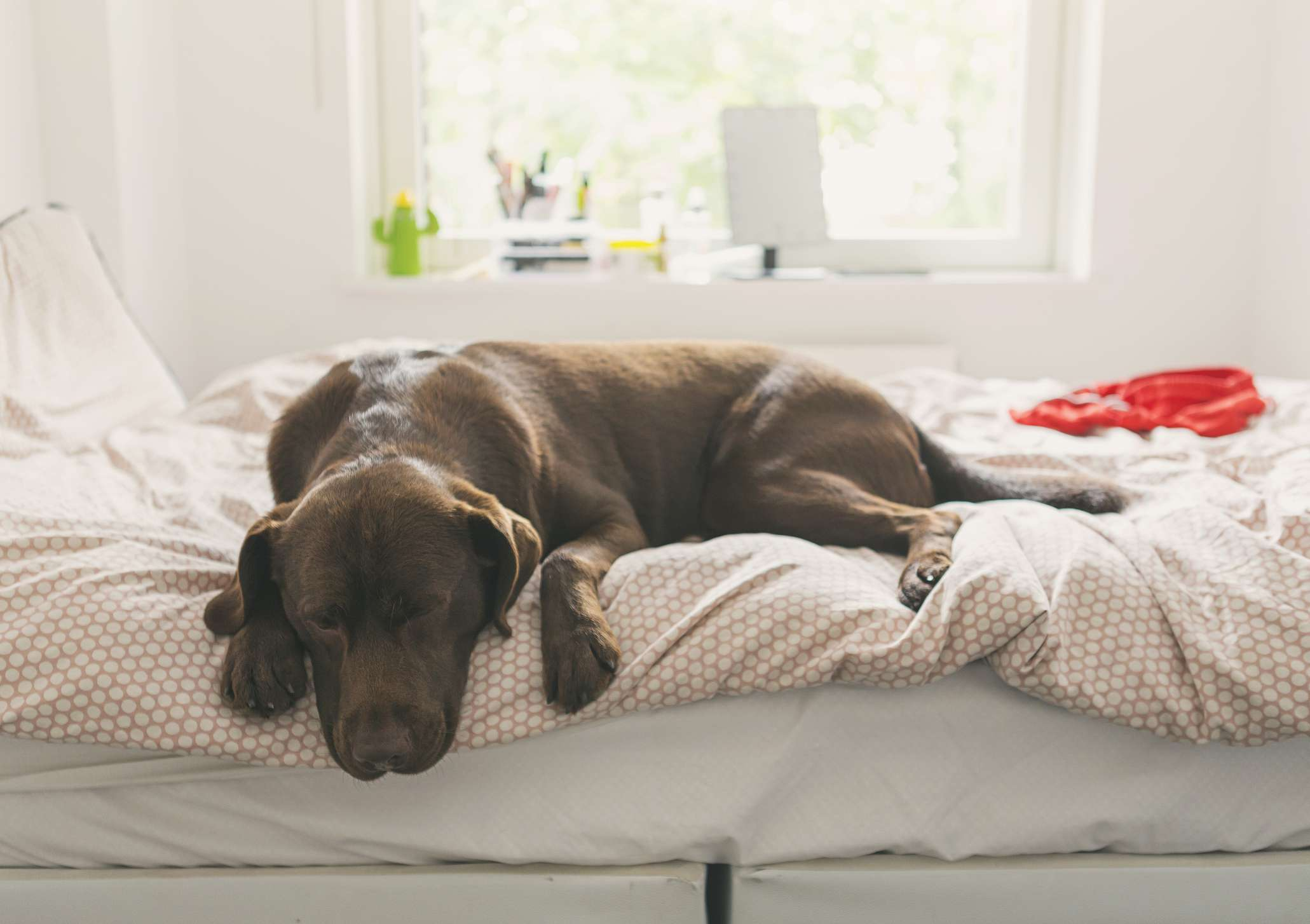 Dog sleeping on bed in clean room