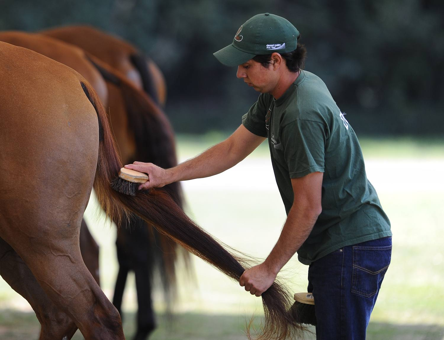 Man grooming horse's tail