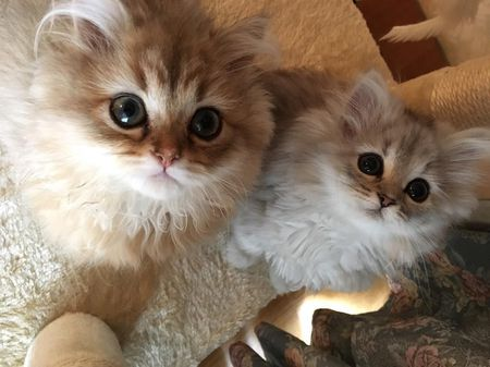 8 Reasons Two Kittens Are Better Than One