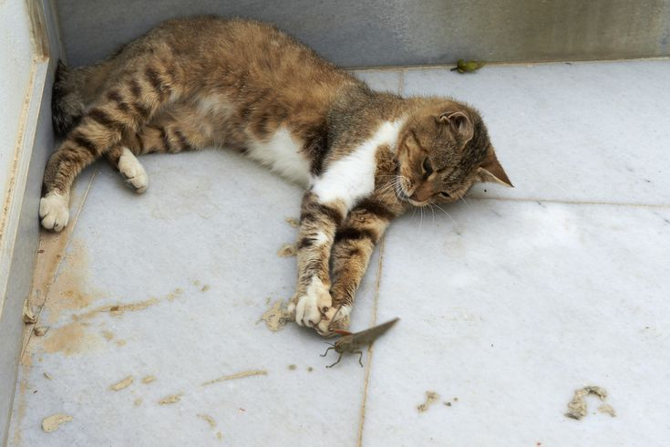 Insects That Are Toxic To Cats And A Few That Aren T